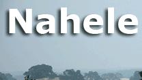 Nahele helpt u. Zet uw website gratis bij Nahele. Door de bomen het bos weer zien. Nahele helpt daar bij.